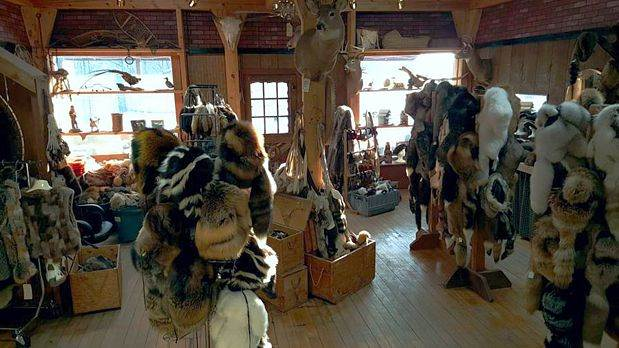 Furs in our store